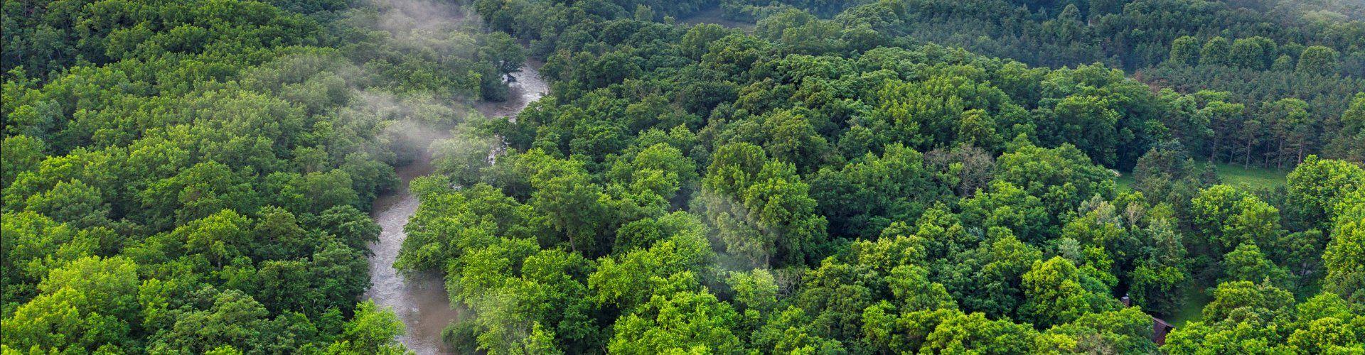 MADE-Marketing-trees-for-all-groen-werken-groene-online-marketing
