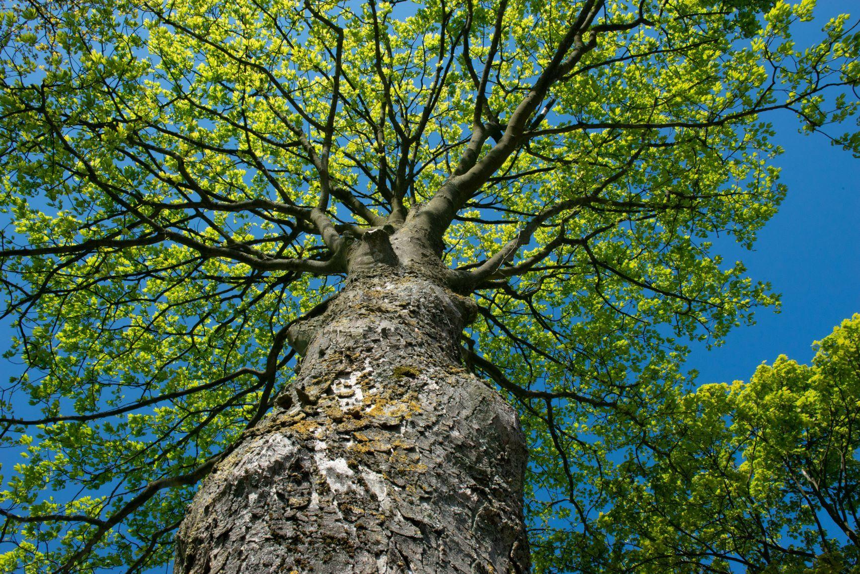 trees-for-all-groen-made-marketing-haarlem-duurzaamheid